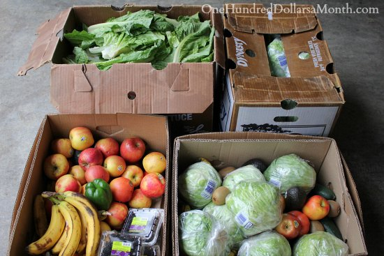 Food Waste In America – Spotted Bananas and Tail Feathers