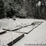 Mavis Butterfield   Backyard Garden Plot Pictures – Week 51 of 52