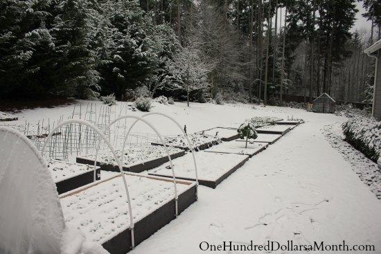 Mavis Butterfield | Backyard Garden Plot Pictures – Week 51 of 52