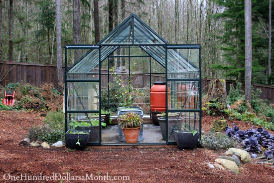Mavis Butterfield | Backyard Garden Plot Pictures – Week 50 of 52