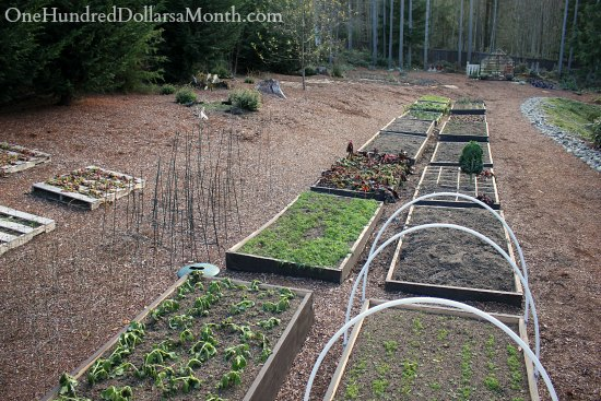 raised garden beds in winter