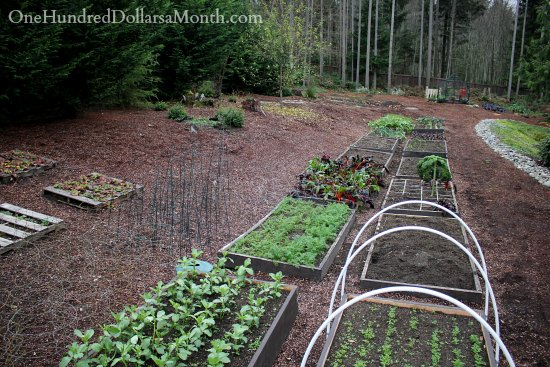 Mavis Butterfield | Backyard Garden Plot Pictures – Week 48 of 52
