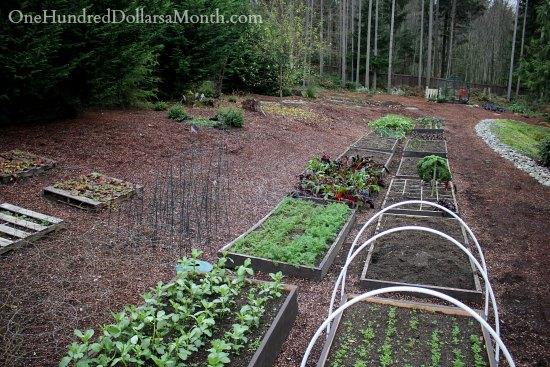 Mavis Butterfield   Backyard Garden Plot Pictures – Week 48 of 52