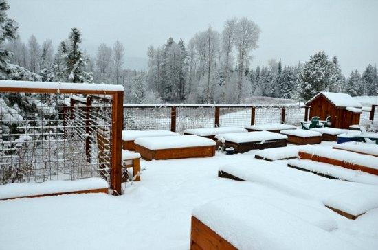 backyard garden with snow