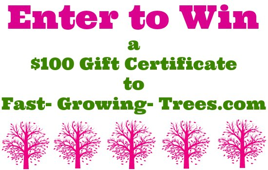 Giveaway: {2} $100 Gift Certificates to Fast Growing Trees