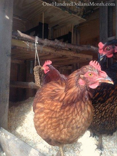 homemade flock blocks for chickens