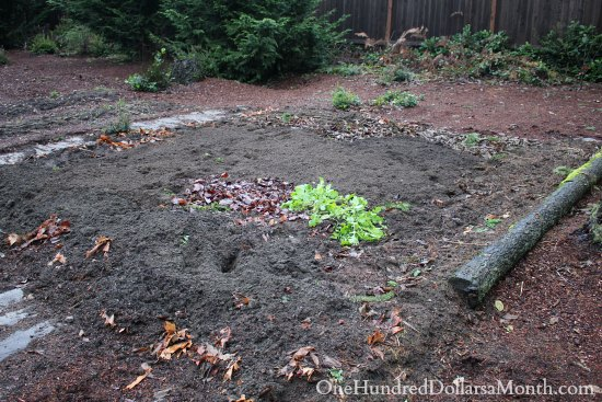 Mavis Garden Blog – Fresh Dirt