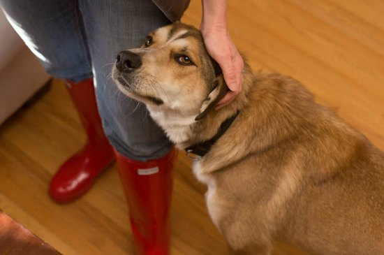 mornings with mavis red hunter boots