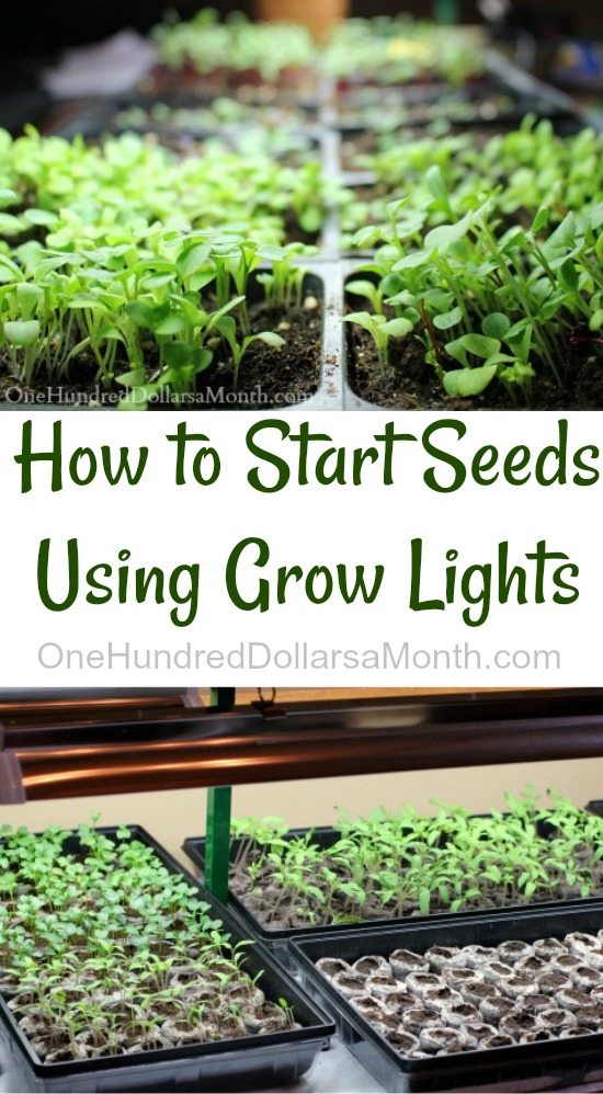 How to Start Seeds Using Grow Lights