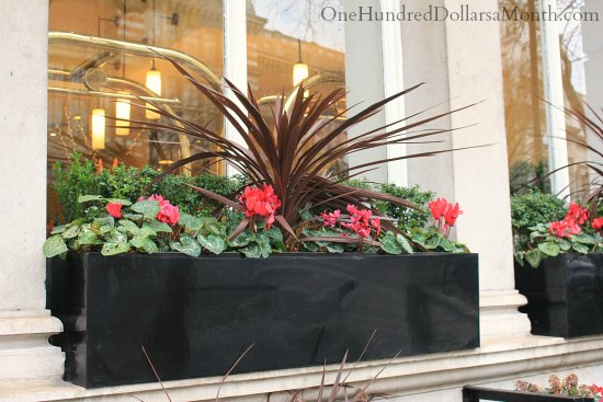 Window Box Planting Plans
