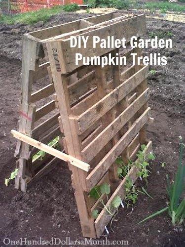 Pallet Garden Pumpkin Trellis