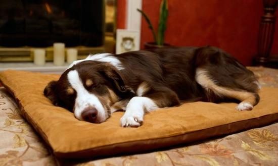memory foam bed dogs