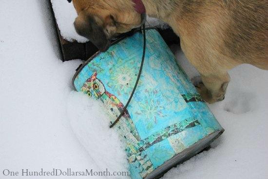 puggle dog snow