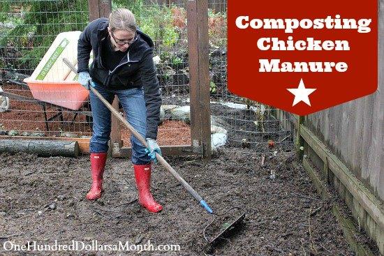 Composting Chicken Manure