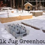 DIY Milk Jug Greenhouse , Winter Sowing