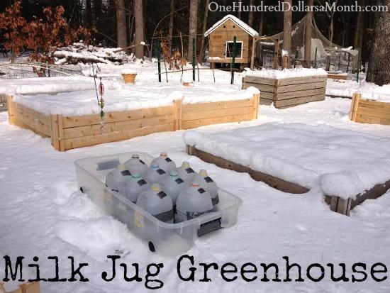 DIY Milk Jug Greenhouse – Winter Sowing