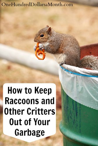 How to keep raccoons and other critters out of your garbage How to keep raccoons out of garden