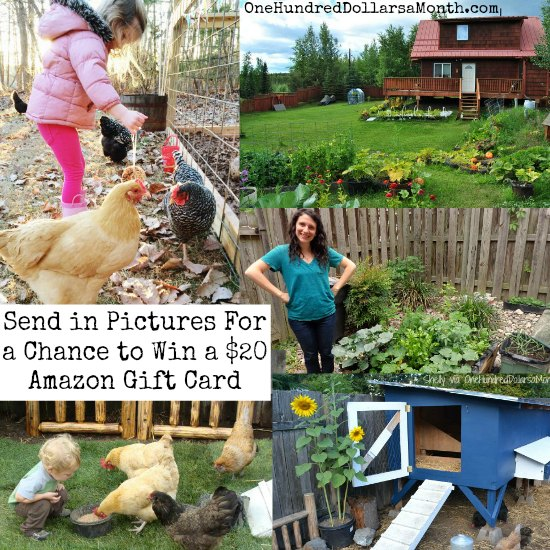Mavis Mail – Send Pictures of Your Garden For a Chance to Win a $20 Amazon Gift Card