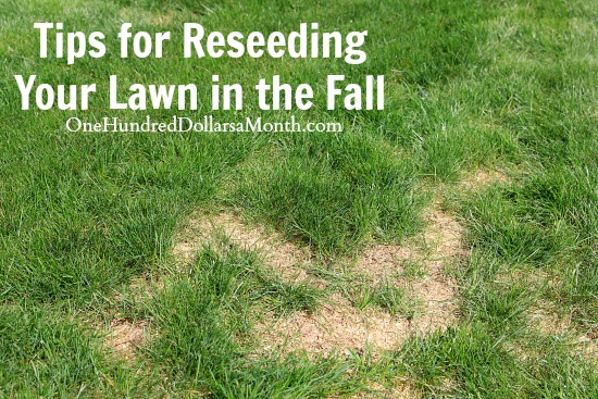 tips for reseeding your lawn in the fall  one hundred dollars a month, Natural flower