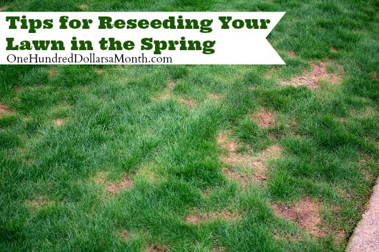 tips for reseeding your lawn in the spring  one hundred dollars a, Natural flower