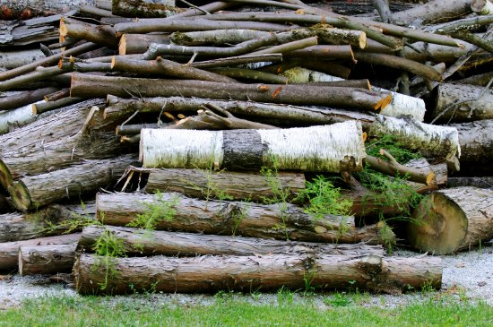 How to Find Free {or Cheap} Firewood