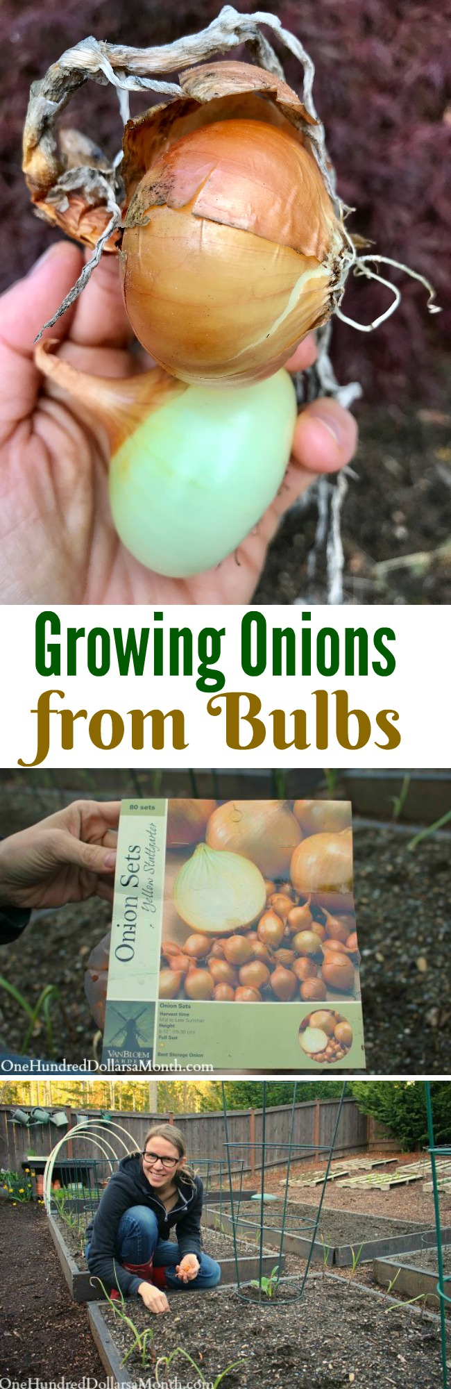 Mavis Garden Blog – How Do You Grow Onions?