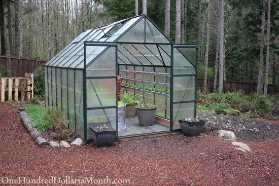 Mavis Butterfield | Backyard Garden Pictures 3/30/14