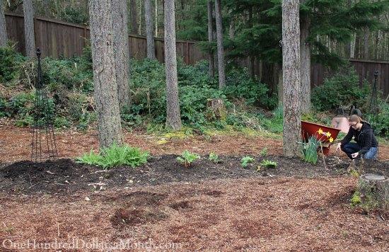 Mavis Garden Blog – Rhubarb, Poppies and Artichokes