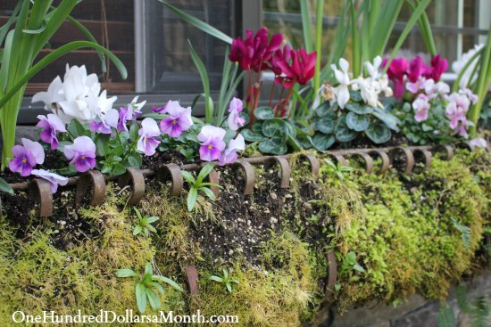 spring window box flowers