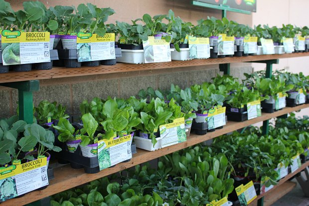 3 Quick Tips to Get Your Garden Growing with Vegetable Starts