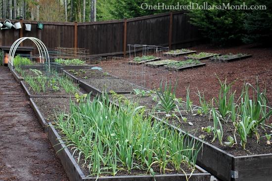 backyard gardens