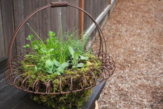 How to Make a Perennial Herb Basket