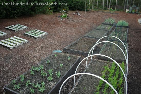 Mavis Butterfield | Backyard Garden Pictures 4/13/14