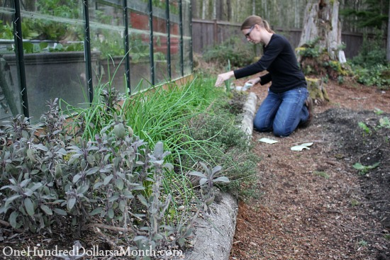 Mavis Garden Blog – Planting Herbs in the Garden
