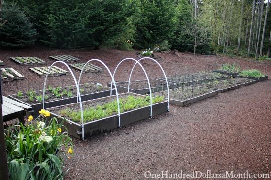 Mavis Butterfield | Backyard Garden Pictures 4/6/14