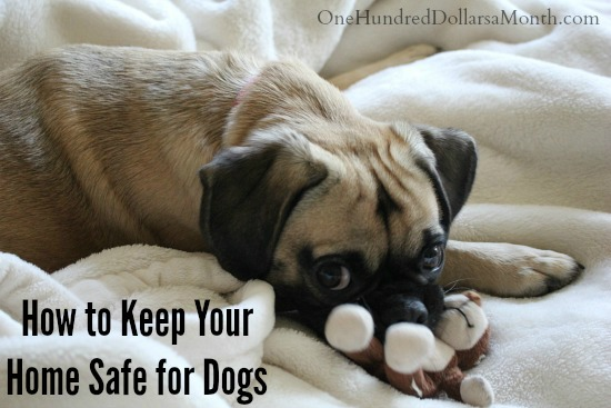 How to Keep Your Home Safe for Dogs
