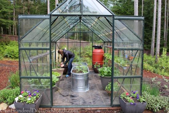 Greenhouse Gardening – Planting Heirloom Tomatoes