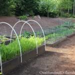 raised garden boxes