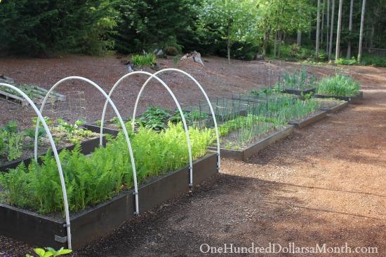 Mavis Butterfield | Backyard Garden Pictures 5/4/14