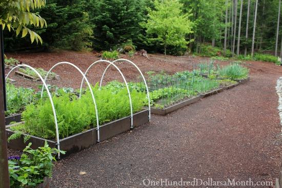 Mavis Butterfield | Backyard Garden Pictures 5/11/14