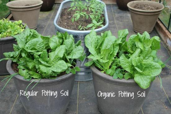 Organic Vs. Non-Organic Veggies