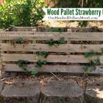 wood pallet strawberry garden