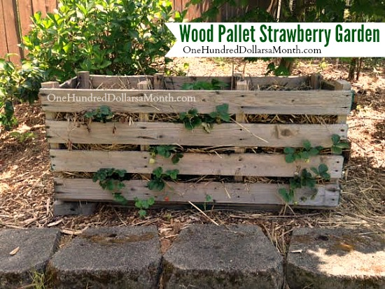 wood pallet strawberry garden
