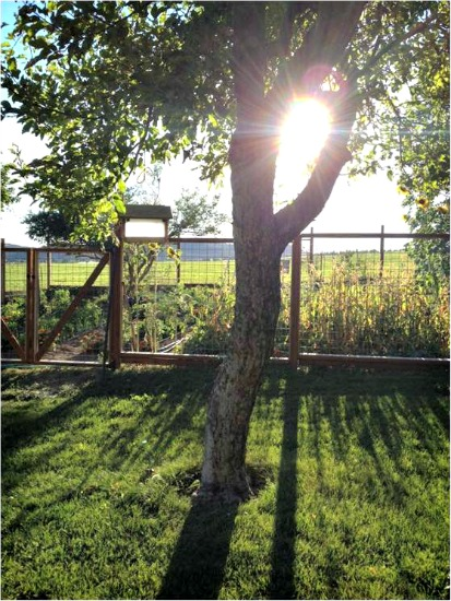 Mavis Mail – Sarah From Prineville, Oregon Sends in Pictures From the Farm