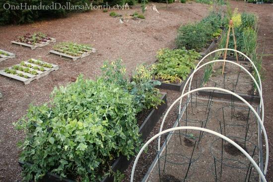 Mavis Butterfield | Backyard Garden Pictures 6/22/14