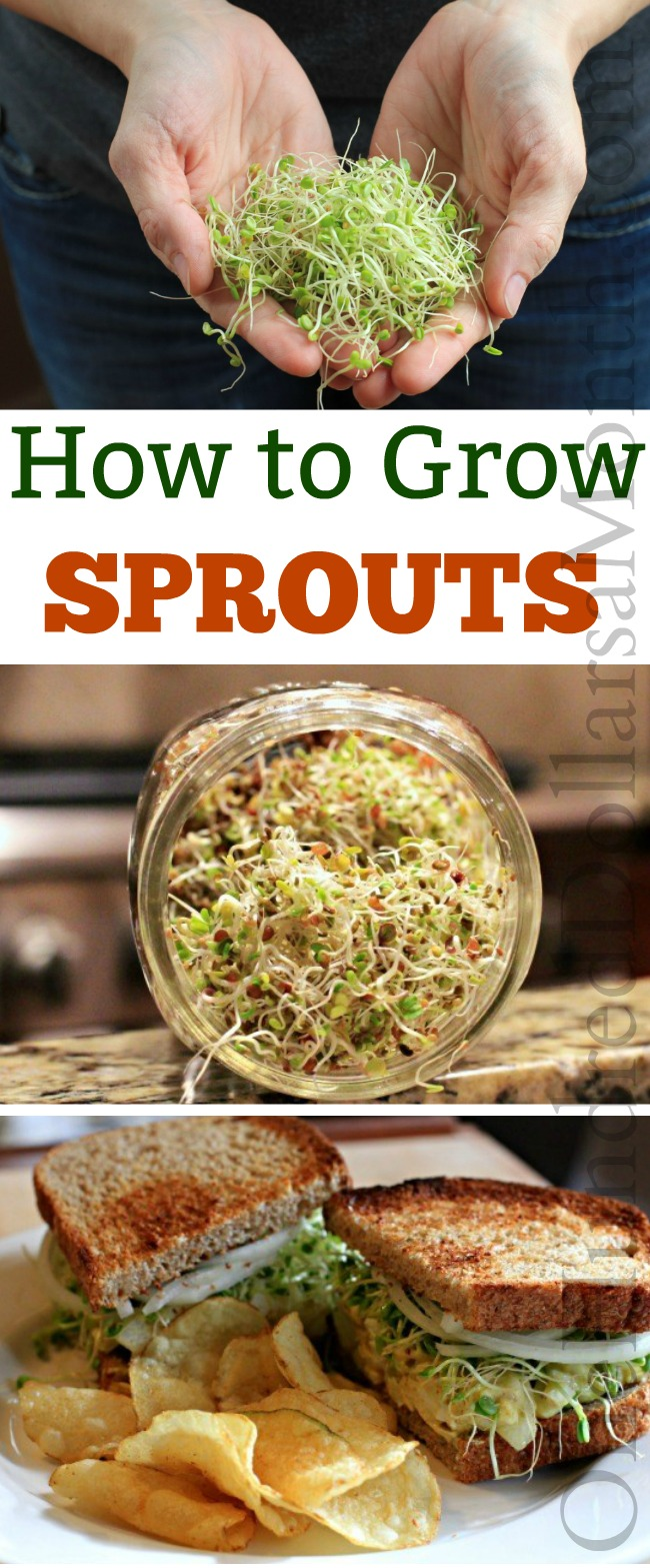 Grow Your Own Sprouts – The Health Benefits