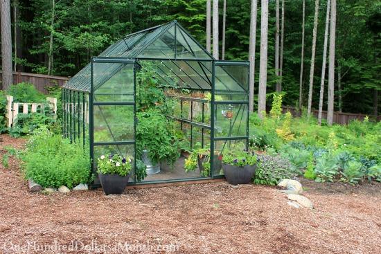 Mavis Butterfield | Backyard Garden Pictures 6/29/14