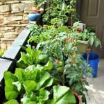 Mavis Mail – Stephanie From Kentucky Sends in Photos of her Patio Garden