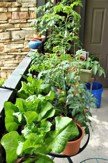 Mavis Mail – Stephanie From Kentucky Sends in Photos of her Patio Garden