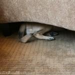 puppy hiding under chair